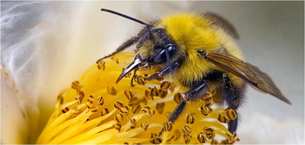 Bee.thumb.jpg.8236c5d68b39e5e5714f7830c8