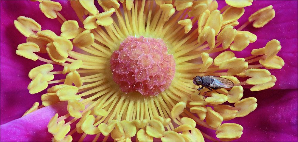 Tiny_fly.thumb.jpg.b64a8c1d0a2d1ebc05cd5