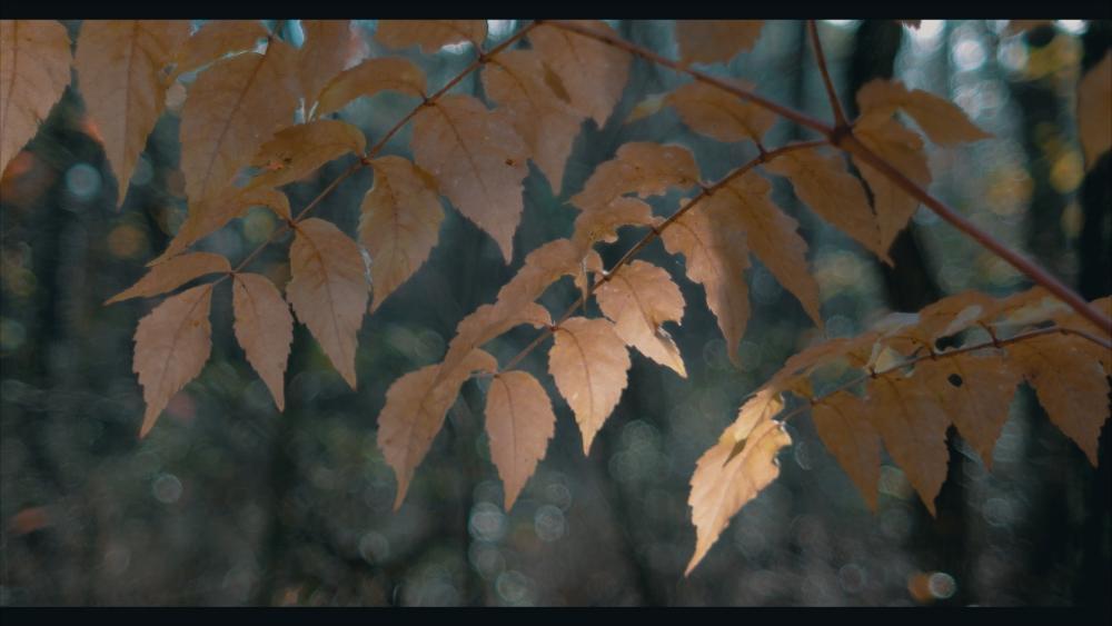 Vivid -0 Contrast M31.jpg