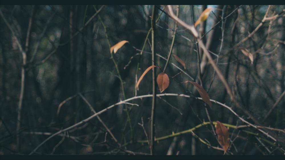 Vivid M31.jpg