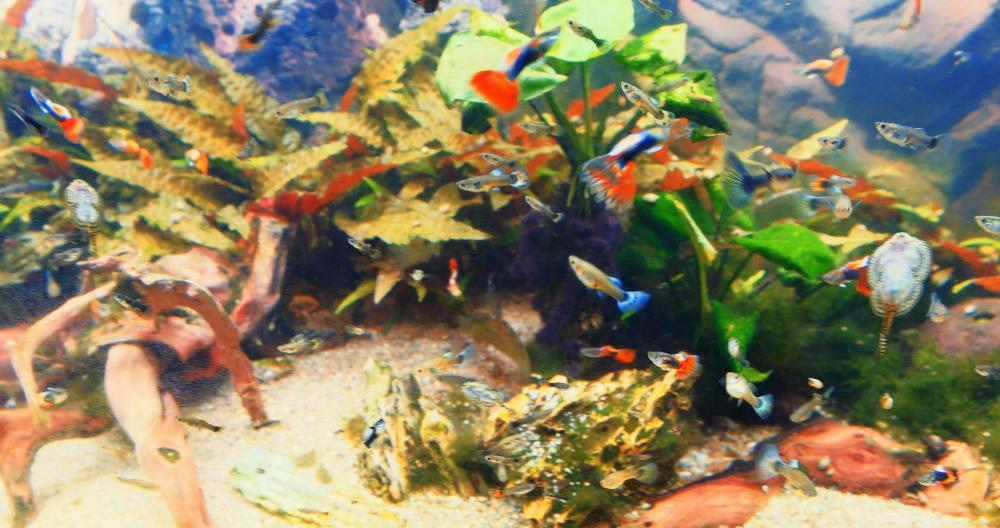56edda63ed590_ColourfulFishFrame-GRADED.