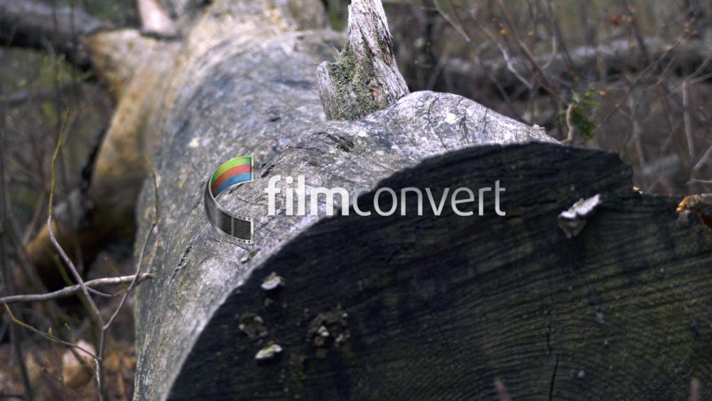 FZ300 Fallen Tree - FilmConvert.jpg