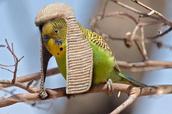 British Bird.jpg