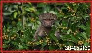 Monkey_01.jpg