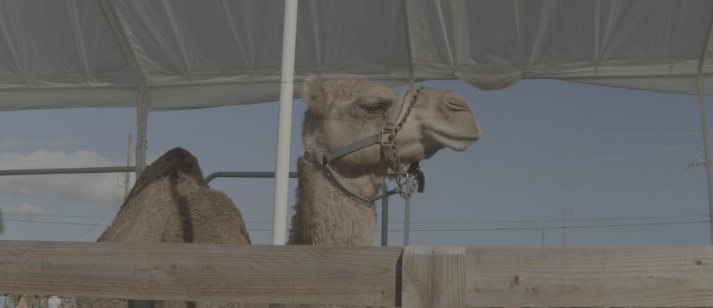 01-camel-vlog-pre.jpg