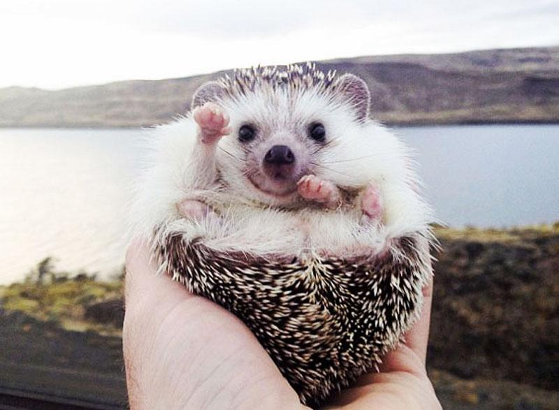 biddy-cute-hedgehog-adventures-FI.jpg.f364b6edc30f4780a9e75a62a891510c.jpg