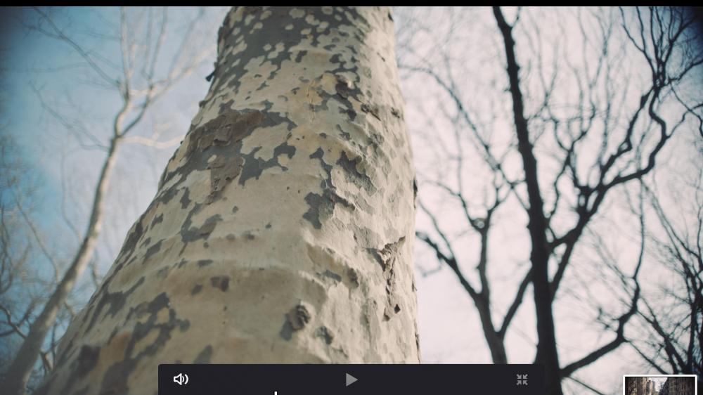 Screen Shot 2019-03-29 at 4.52.13 PM.jpg