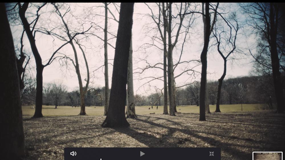 Screen Shot 2019-03-29 at 4.51.32 PM.jpg