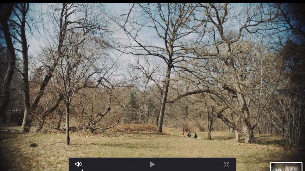 Screen Shot 2019-03-29 at 4.51.46 PM.jpg