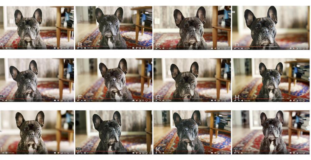 DOG.thumb.jpg.d94525360cccffa12eaf9bcf70229b2b.jpg