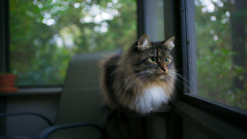 kitty_1_16.2.thumb.jpg.bc8aaee9dcbb1c9dc3bb52634d4e6637.jpg