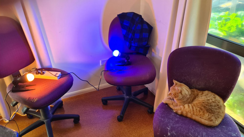 cat-light.jpg
