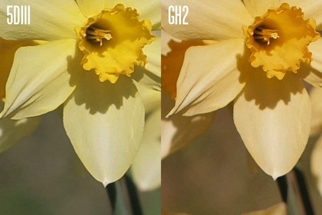 5D Mark III vs GH2