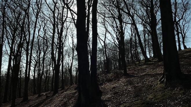 5D Mark III in the woods