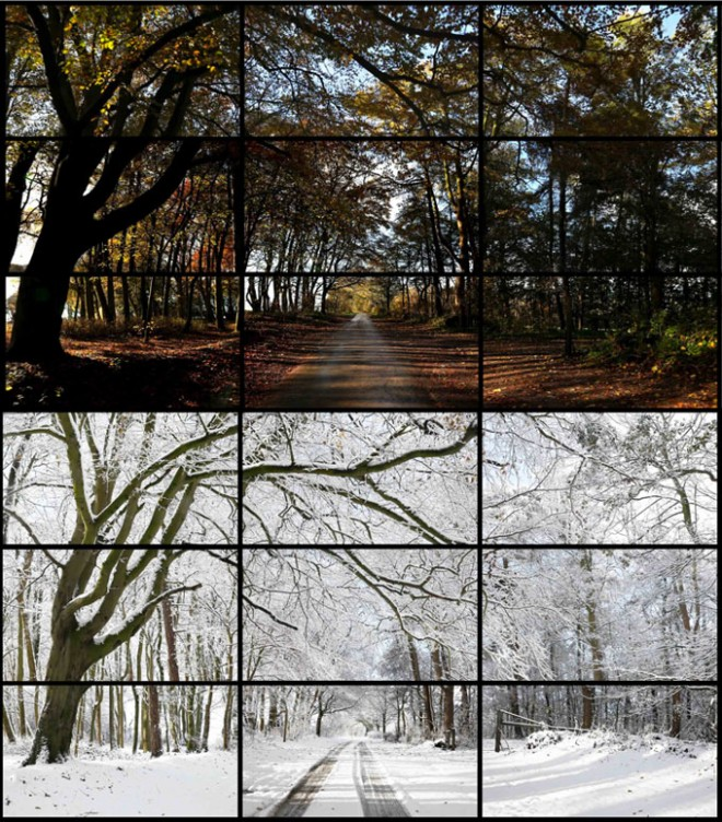 David Hockney 'Woldgate Woods' video installation
