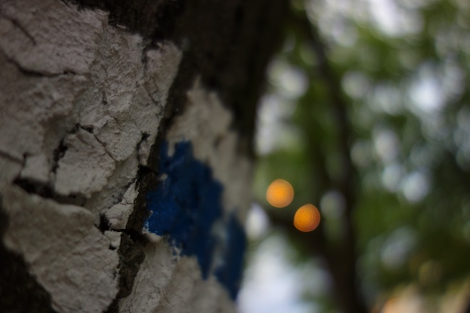 Shallow depth of field coming to a pocket near you