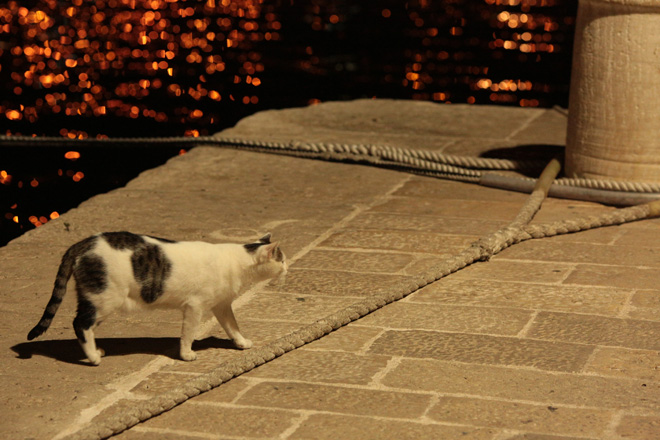 135mm F2L and the local harbour cat