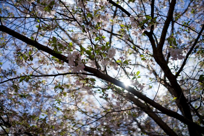 rx1-blossom