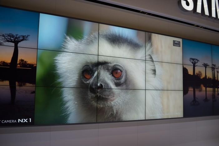 nx1-4k-monkey