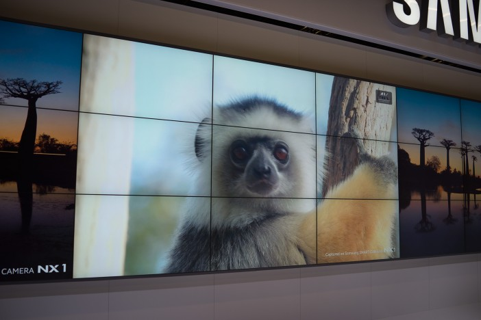 nx1-monkey-4k