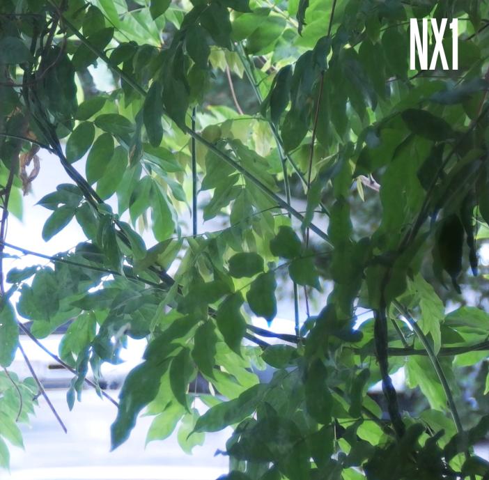 nx1-leaves